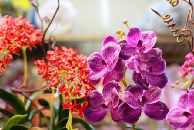 Chatuchak Orchids By Chic N Cheap Living Little Luxury