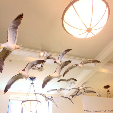 Museum of Natural History seagulls NYC by little luxury list