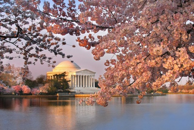 best places to see cherry blossoms Washington DC