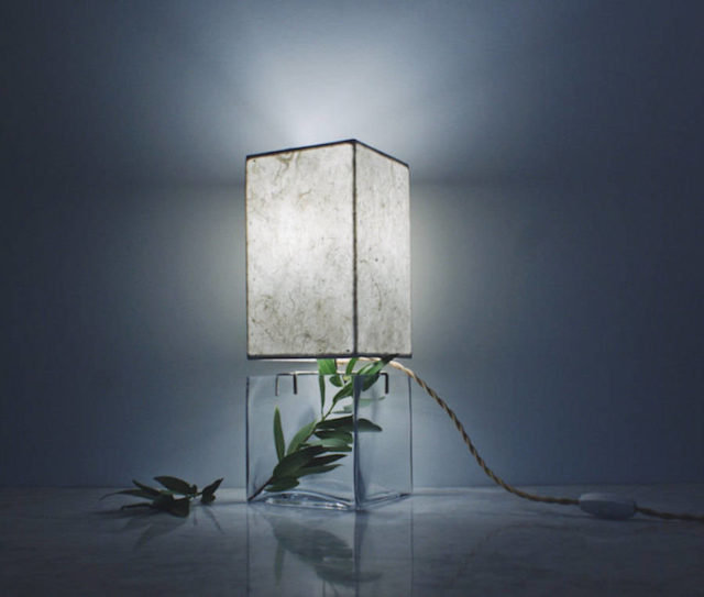 Inventive-Terrarium-Inserted-in-a-Glass-Lamp3-900x764