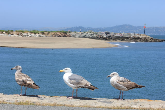 How to Survive Vacation with a Baby - San Francisco Ferry Building seagulls by little luxury list