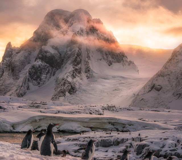 Trip to Antarctica by Josselin Corneau penguins