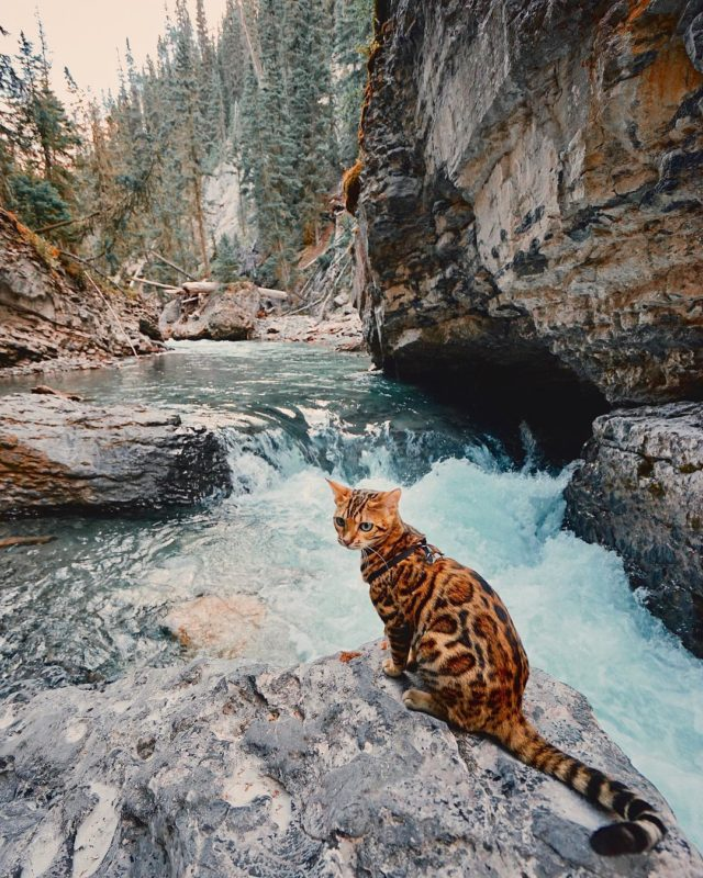 Adventures of Suki the cat by waterfall