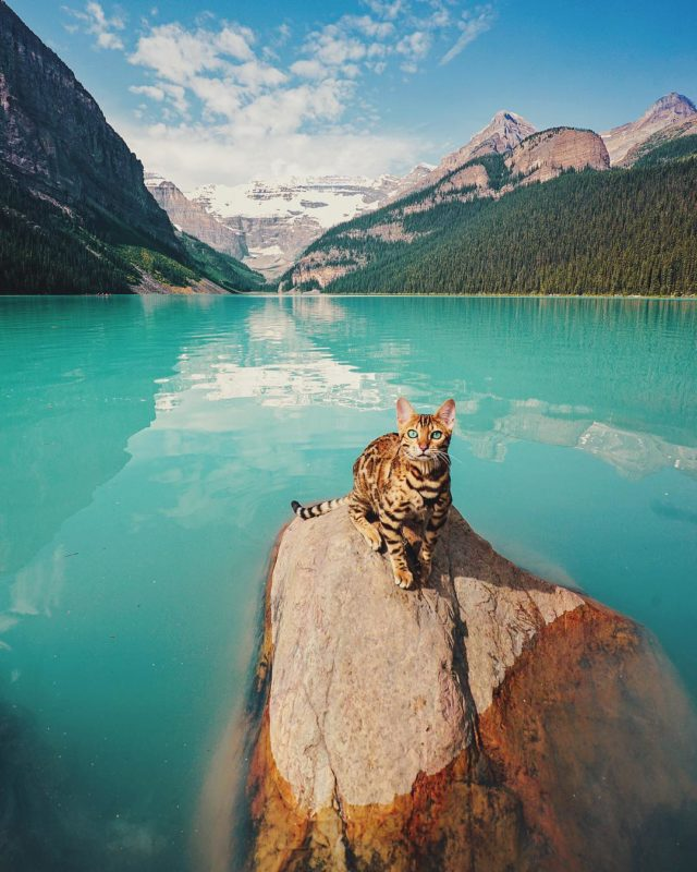 Adventures of Suki the cat in front of lake