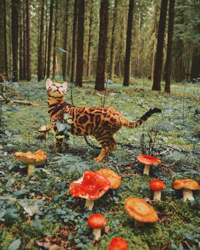 Adventures of Suki the cat mushrooms