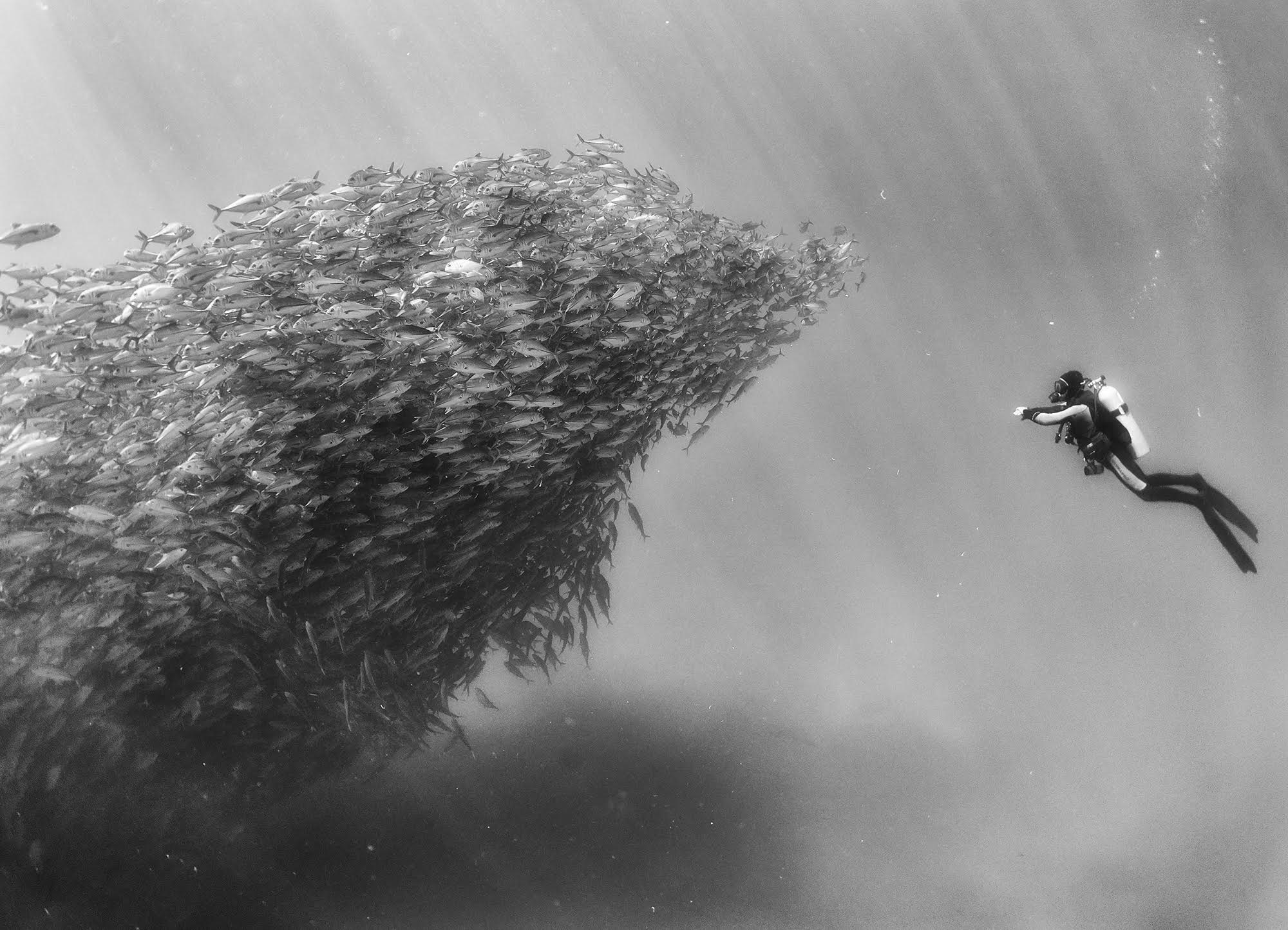 Black and white underwater photography by anuar patjane school of fish